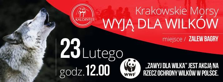 Krakowskie Morsy wyją dla wilków