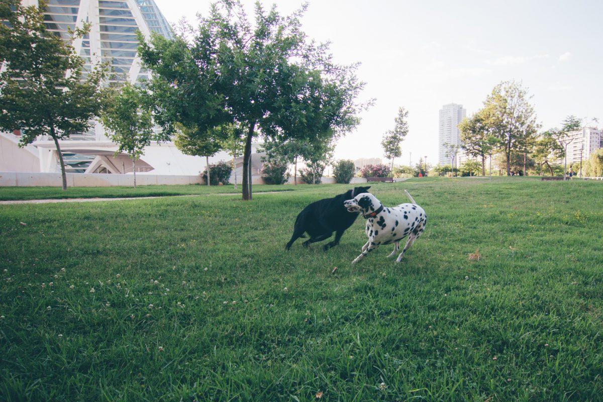 Czy zabrać ze sobą psa na wakacje? - Zoltan w Hiszpanii.